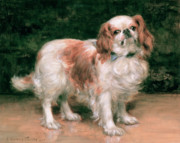 Dog Portrait Paintings - King Charles Spaniel by George Sheridan Knowles