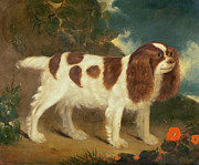 Red Flowers Art - King Charles Spaniel by William Thompson