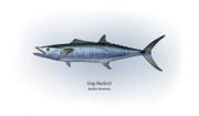 King Mackerel Print by Ralph Martens
