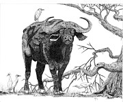 Bull Horns Prints - King of the Cape-Buffalo Print by Doug Hiser