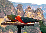 Red And Green Photo Metal Prints - King Parrots and The Three Sisters Metal Print by Kaye Menner