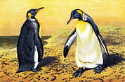 Aptenodytes Prints - King Penguins Print by Sheila Terry