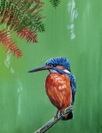 Kingfisher Prints - Kingfisher Print by Arie Van der Wijst