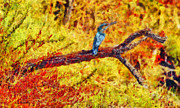 Wetland Paintings - Kingfisher by George Rossidis