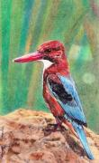 Kingfisher Mixed Media - Kingfisher by Haritharaka Nath