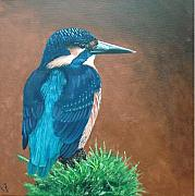 Kingfisher Originals - Kingfisher by Martin Girolami