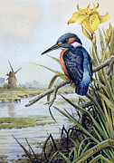 Kingfisher Prints - Kingfisher with Flag Iris and Windmill Print by Carl Donner