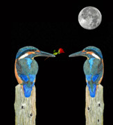 Kingfisher Mixed Media - Kingfisher with rose by Eric Kempson