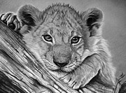 Cubs Pastels Posters - Kinza The Cub Poster by Lucy Swinburne