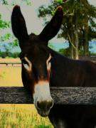 Donkeys Prints - Kiss Me Baby Print by Joyce  Kimble Smith