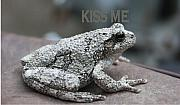 Brids Art - Kiss Me Frog by Tom Johnson