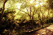Central Park Photos - Kissed by the Sun - Central Park - New York City by Vivienne Gucwa