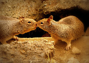 Cindy Wright Prints - Kissing Squirrels Print by Cindy Wright