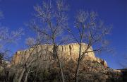 Spring Views Framed Prints - Kitchen Mesa And Bare Cottonwood Trees Framed Print by Rich Reid