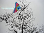 Kate Gallagher - Kite Caught in Tree
