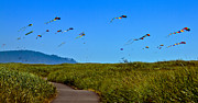 Haybales Photo Metal Prints - Kites Metal Print by Robert Bales