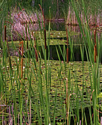 Cattails Photos - Kittatiny Spring by Robert Pilkington