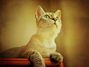 Sitting Photos - Kitten by Gesrules