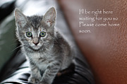 Hallmark Photos - Kitten Greeting Card by Micah May