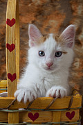 Baskets Photos - Kitten in basket with hearts by Garry Gay