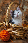 Baskets Posters - Kitten in basket with orange yarn Poster by Garry Gay
