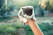 Pet Care Framed Prints - Kitten In Hand, 2010 Framed Print by Emily Golitzin