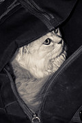 Kitten Pyrography Prints - Kitten in the backpack Print by Elena Eretina