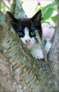 Animals - Kitten In Tree by Kathy Gibbons