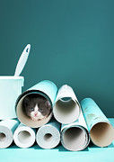 Animal Wallpaper Posters - Kitten In Wallpaper Tube Poster by Martin Poole