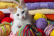 Domestic-pet Posters - Kitten in yarn Poster by Garry Gay