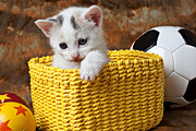 Baskets Posters - Kitten in yellow basket Poster by Garry Gay