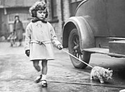 Girl Looking Down Posters - Kitten On Lead Poster by Fox Photos