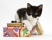 Packages Framed Prints - Kitten On Packages Framed Print by Mark Taylor