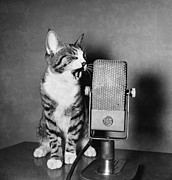 Microphone Prints - Kitten on the Radio Print by Syd Greenberg and Photo Researchers