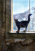 Run Down Posters - Kitten on Windowsill of Abandoned House Poster by Jill Battaglia