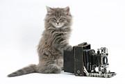 Mark Taylor - Kitten Photographer