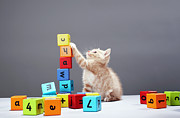 Cat Paw Posters - Kitten Playing With Building Blocks Poster by Martin Poole
