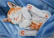 Kitten Pastels - Kitten Sleeping by Valentina Vassilieva