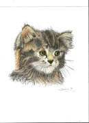 Copy Drawings Posters - Kitten Poster by Therese A Kraemer