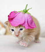 Domestic Animals Art - Kitten Walking With Flower Hat by Sanna Pudas