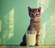 Kitten Photo Posters - Kitten With Glass Of Milk Poster by By Julie Mcinnes