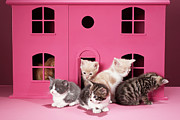 Home Ownership Framed Prints - Kittens In Dolls House Framed Print by Martin Poole