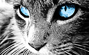 Kitty Digital Art - Kitty Blue Eyes by The DigArtisT