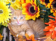 Kitteh Prints - Kitty Cat Lost in Thought - Cute Kitten with Blue Eyes relaxing in a Flower Basket - Fall Season Print by Chantal PhotoPix