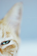 Animal Eye Prints - Kitty Print by Cindy Loughridge