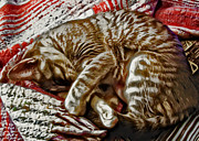 Kitty Digital Art - Kitty Dreams by David G Paul
