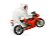 Raising Art - Kitty on a Motorcycle Doing a Wheelie by Oleksiy Maksymenko