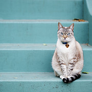 Pet Collar Posters - Kitty On Blue Steps Poster by Lauren Rosenbaum
