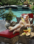 Red White And Blue Paintings - Kitty on lounging chair having a drink    by Gina Femrite