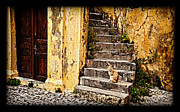 Rhodes Greece Framed Prints - Kitty on steps 2 Framed Print by Thomas Kessler